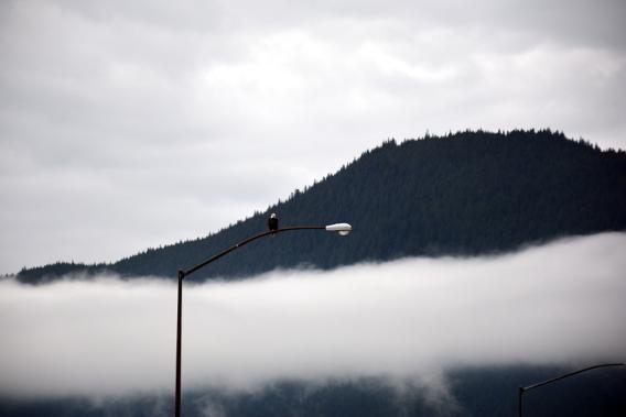 Bald Eagle Juneau