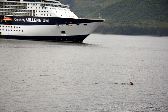 Celebrity Millennium Sea Lions