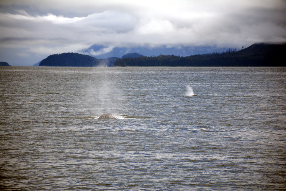 Double Whale Sighting