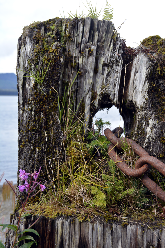 Icy Strait Point Chain