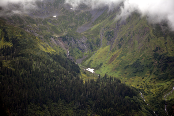 Juneau Forest