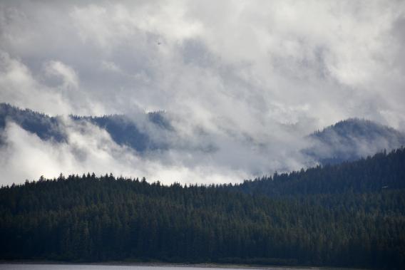 Misty Alaska Forest from Boat