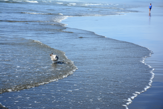 Ocean Shore Beach