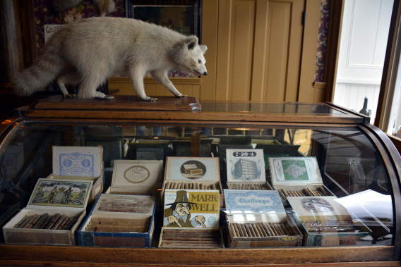 Skagway Old Time Bar Cigars Raccoon