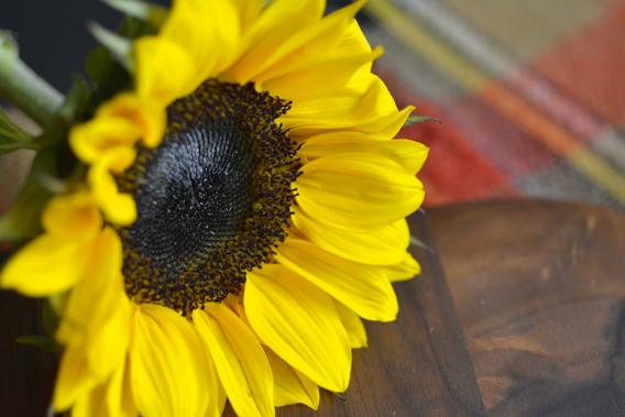 Salmon Chowder Recipe Sunflowers