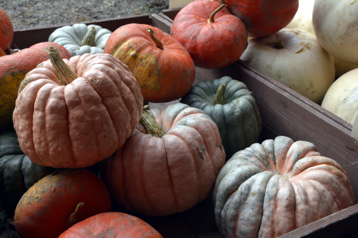 Sonny Acres Farm Gourds