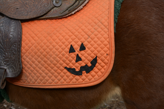 Sonny Acres Farm Horse Pumpkin Blanket