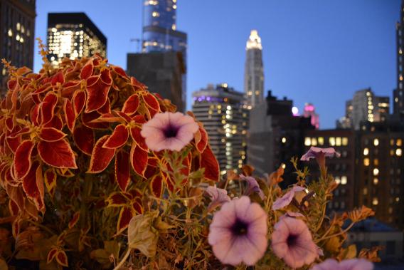 Chicago Skyline MCA Apartments