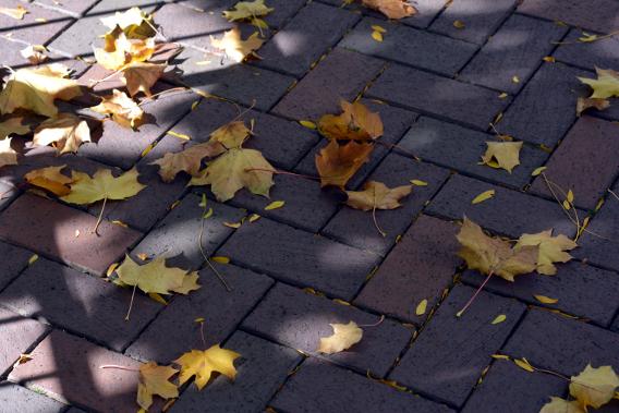 Autumn Leaves on Brick