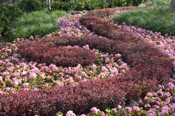 Gardens at Disney's Magic Kingdom