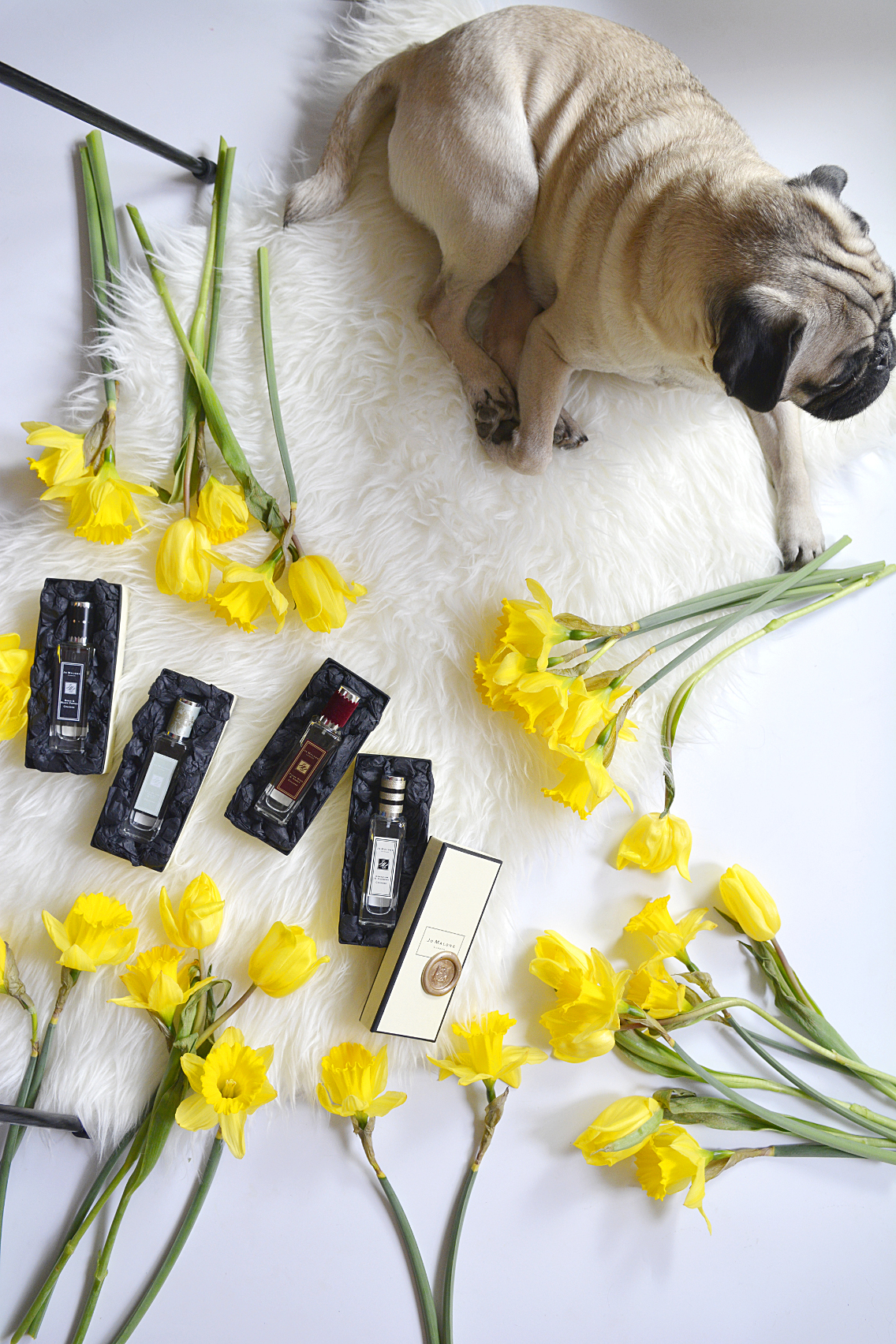 Jo Malone London Rock the Ages Cologne with Pug
