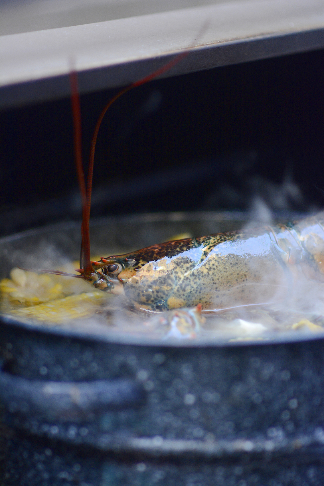 Lobster Boil 15