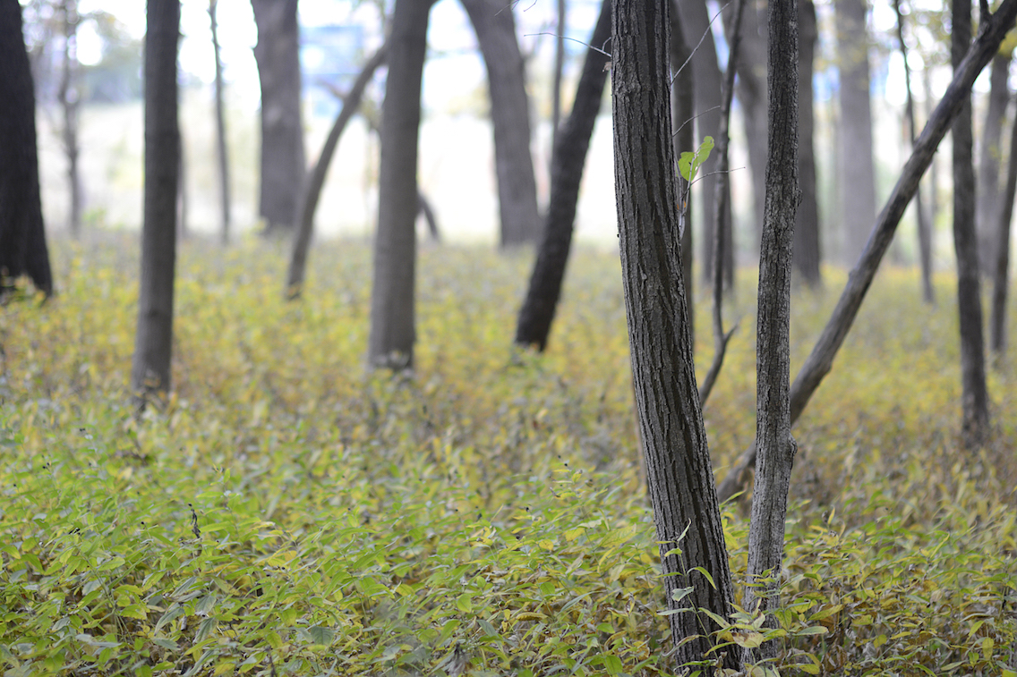 Morton Arboretum Illinois
