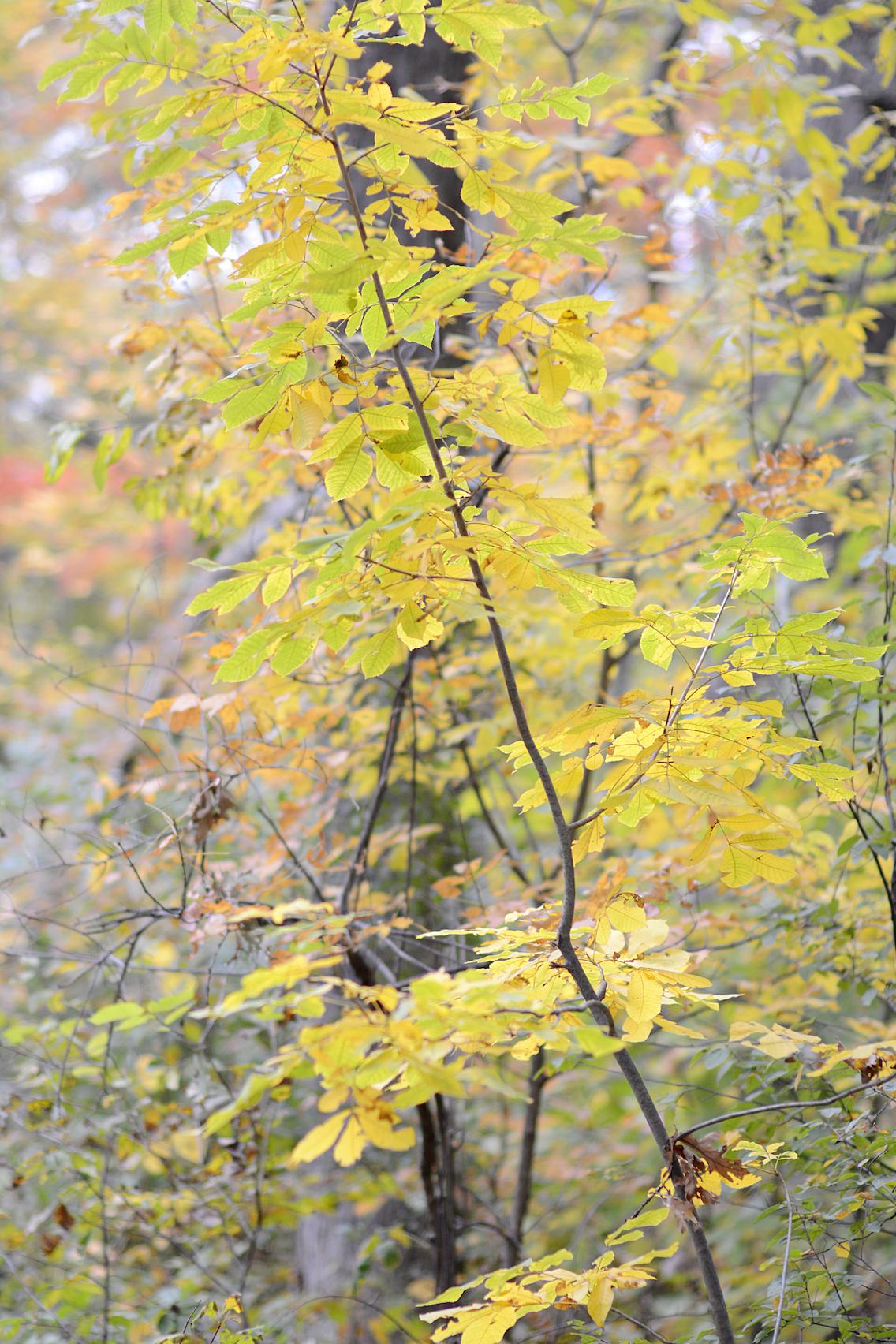 Morton Arboretum Illinois 1
