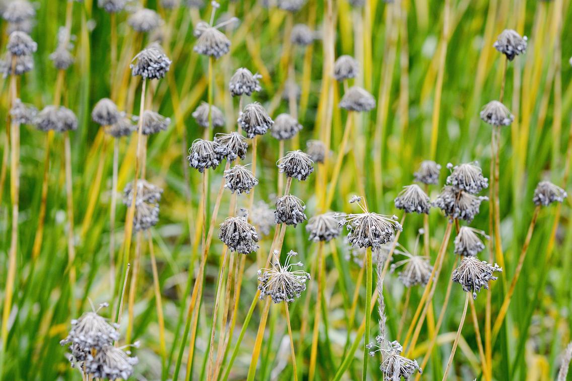 Morton Arboretum Illinois 6