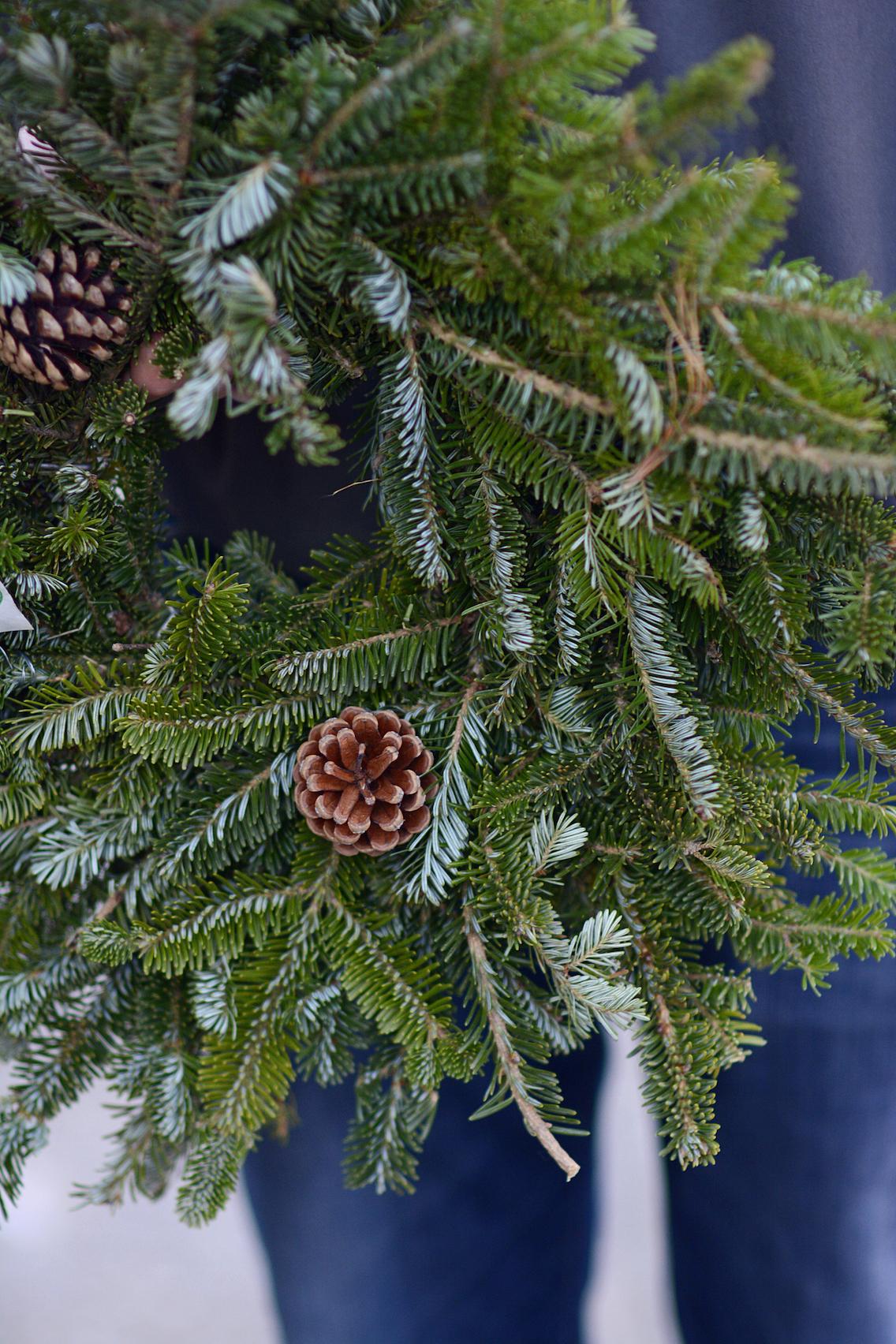 Chicago Christmas Tree Farm 3