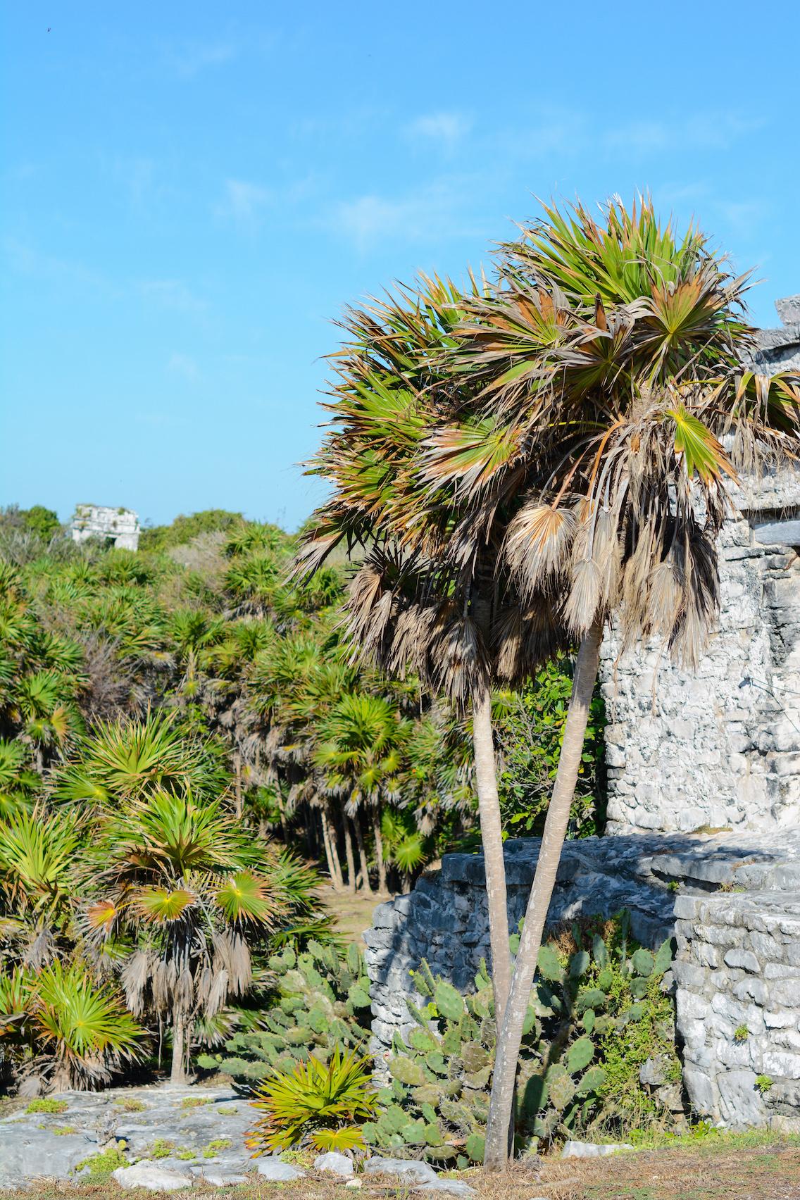 Tulum Mayan Ruins Mexico 59