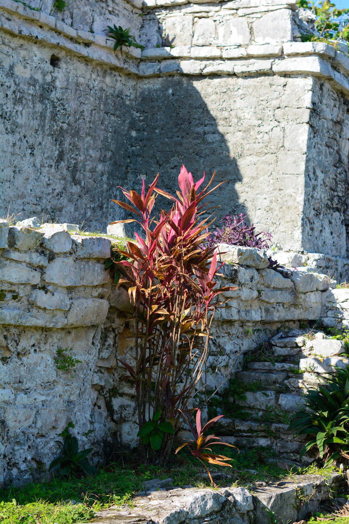Tulum Mayan Ruins Mexico 11