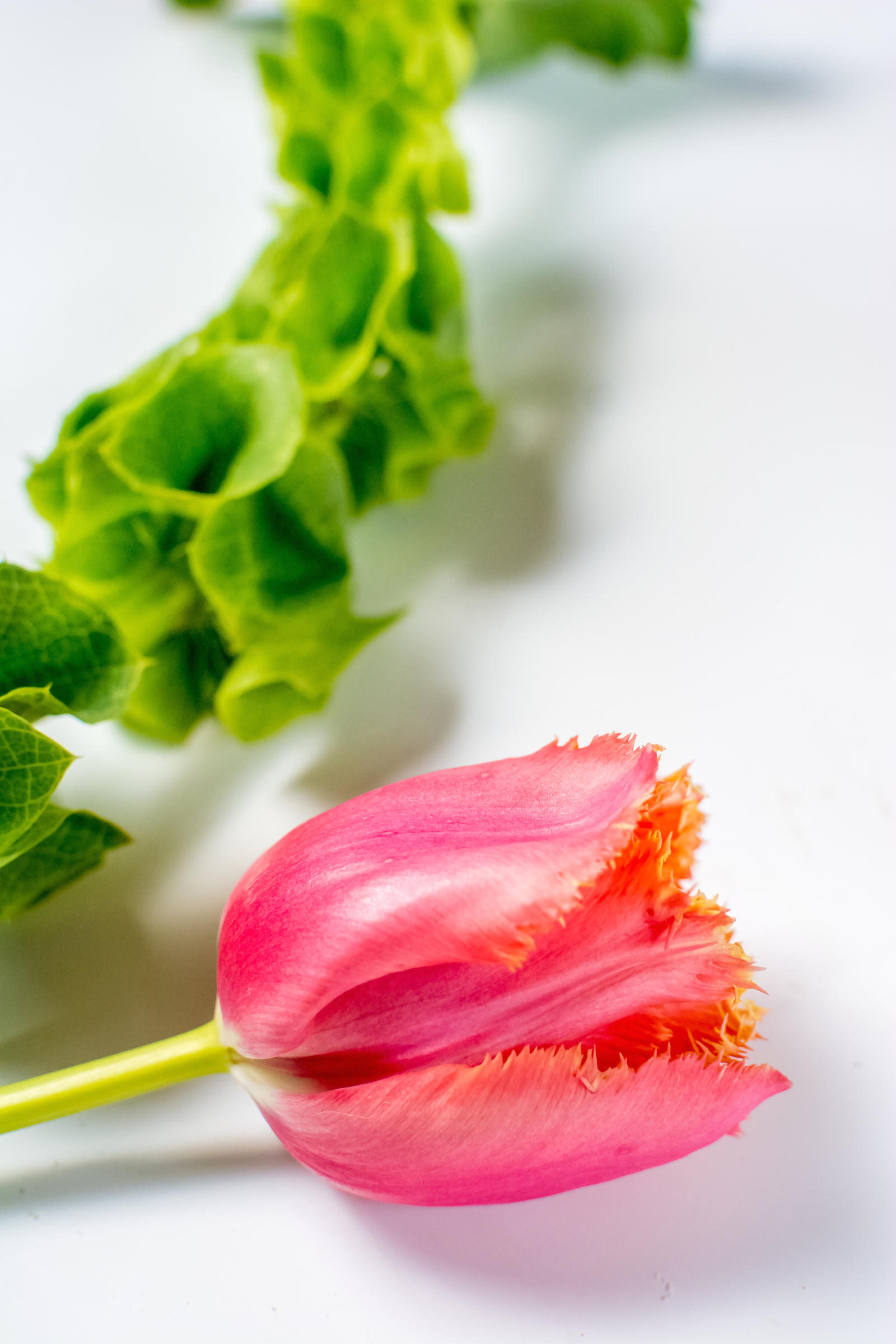 Goji Berry Kale Detox Salad Recipe