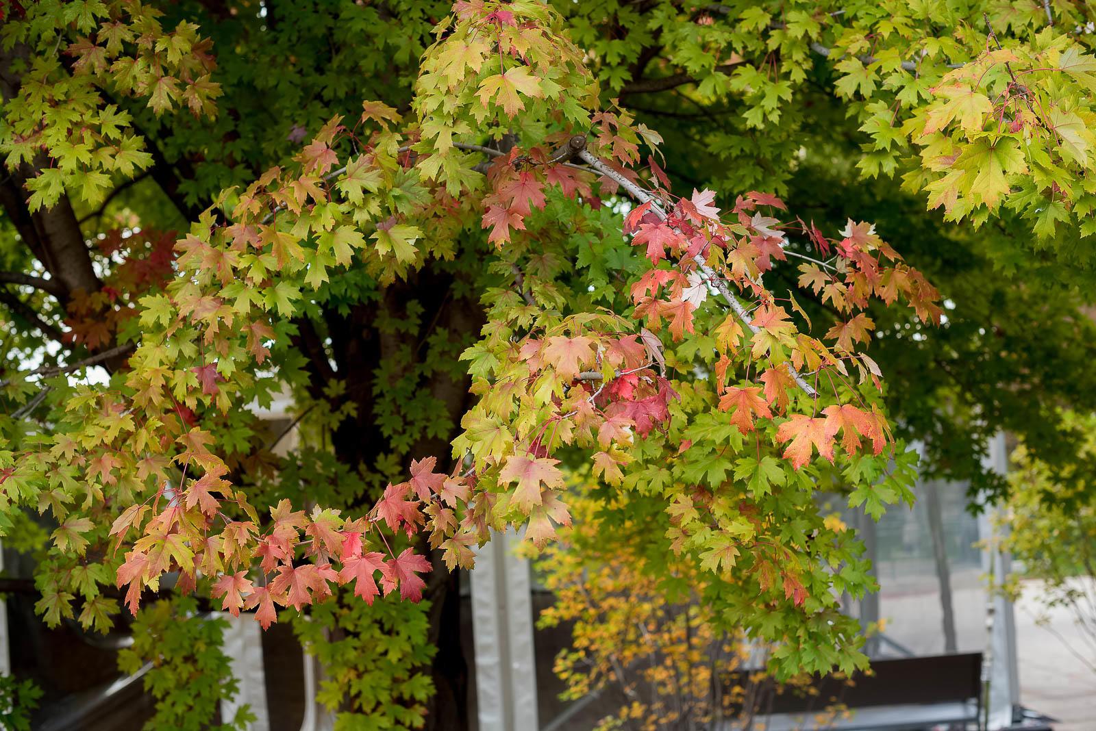 Chicago Millennium Park Fall Autumn