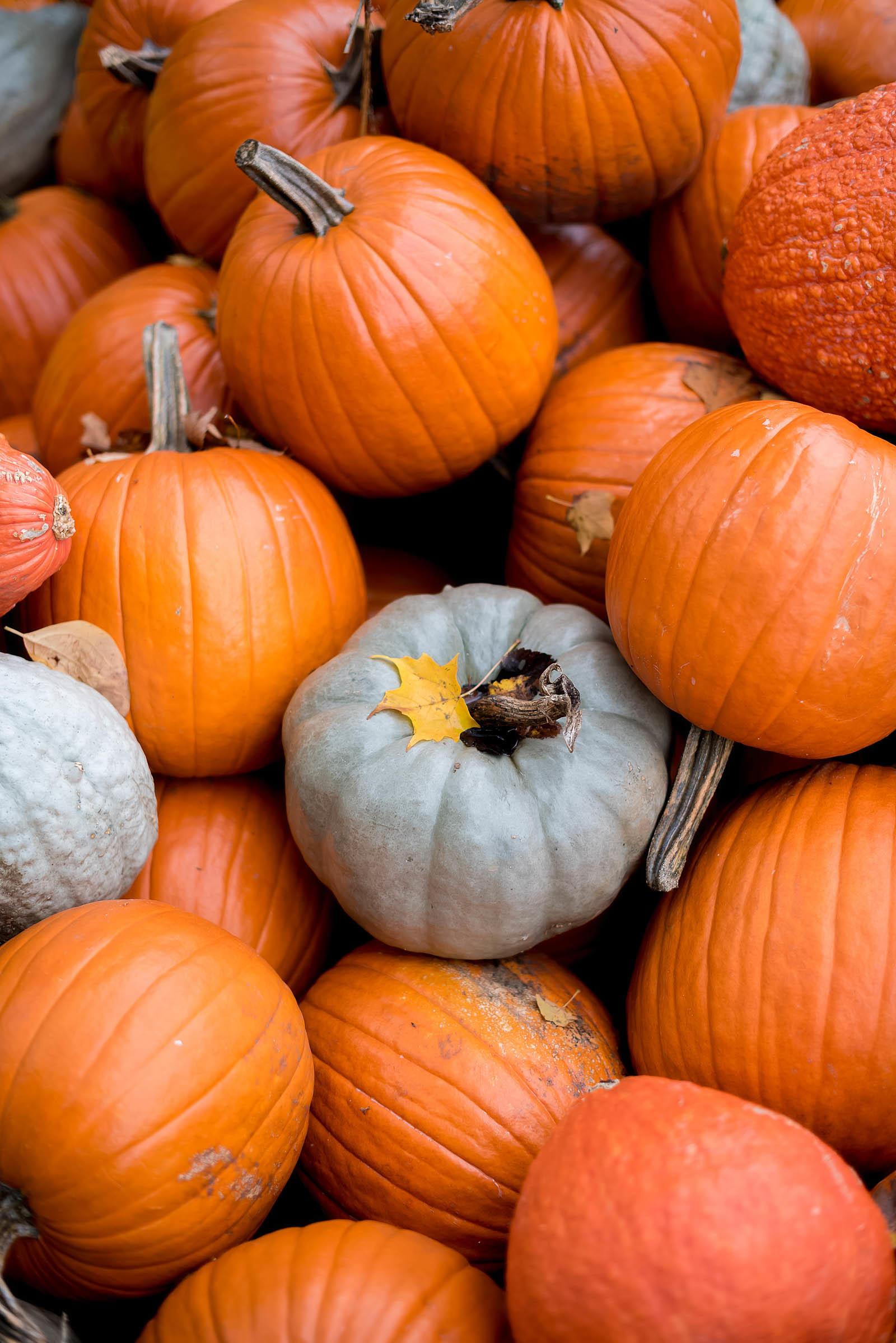 Morton Arboretum Fall Autumn
