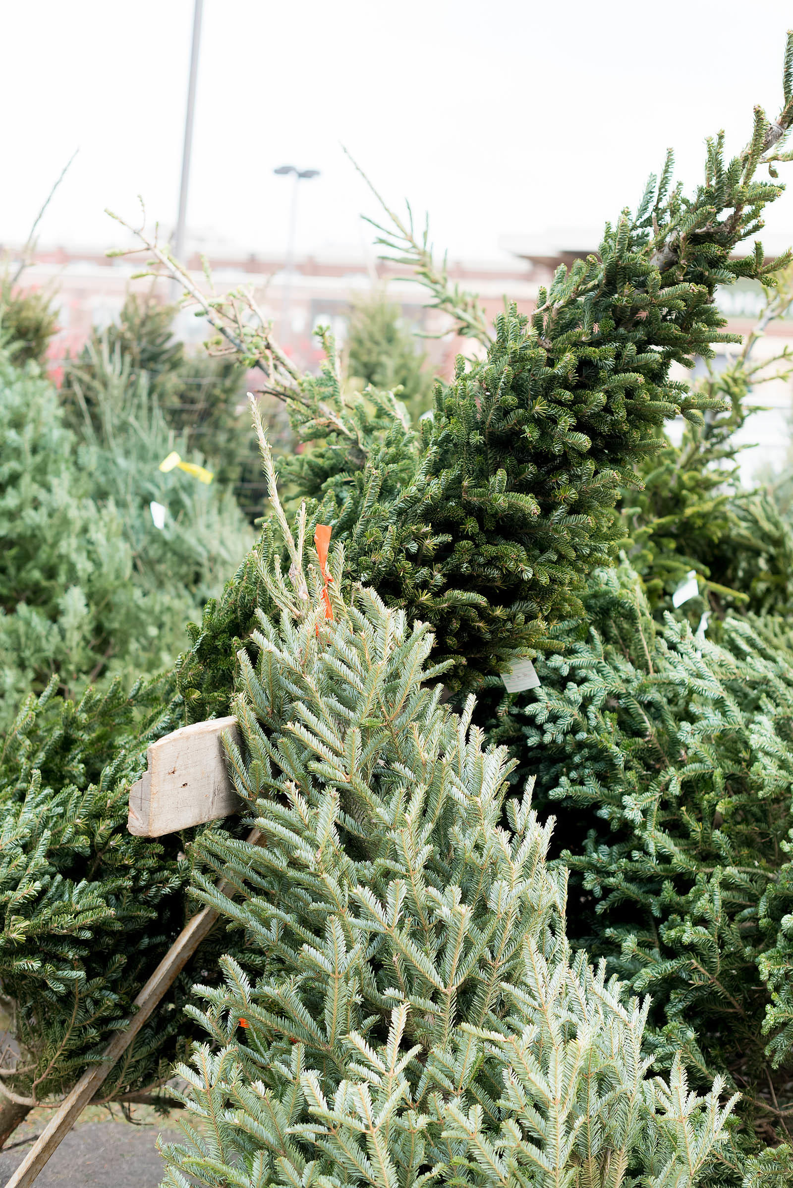 Chicago Christmas Tree Farm
