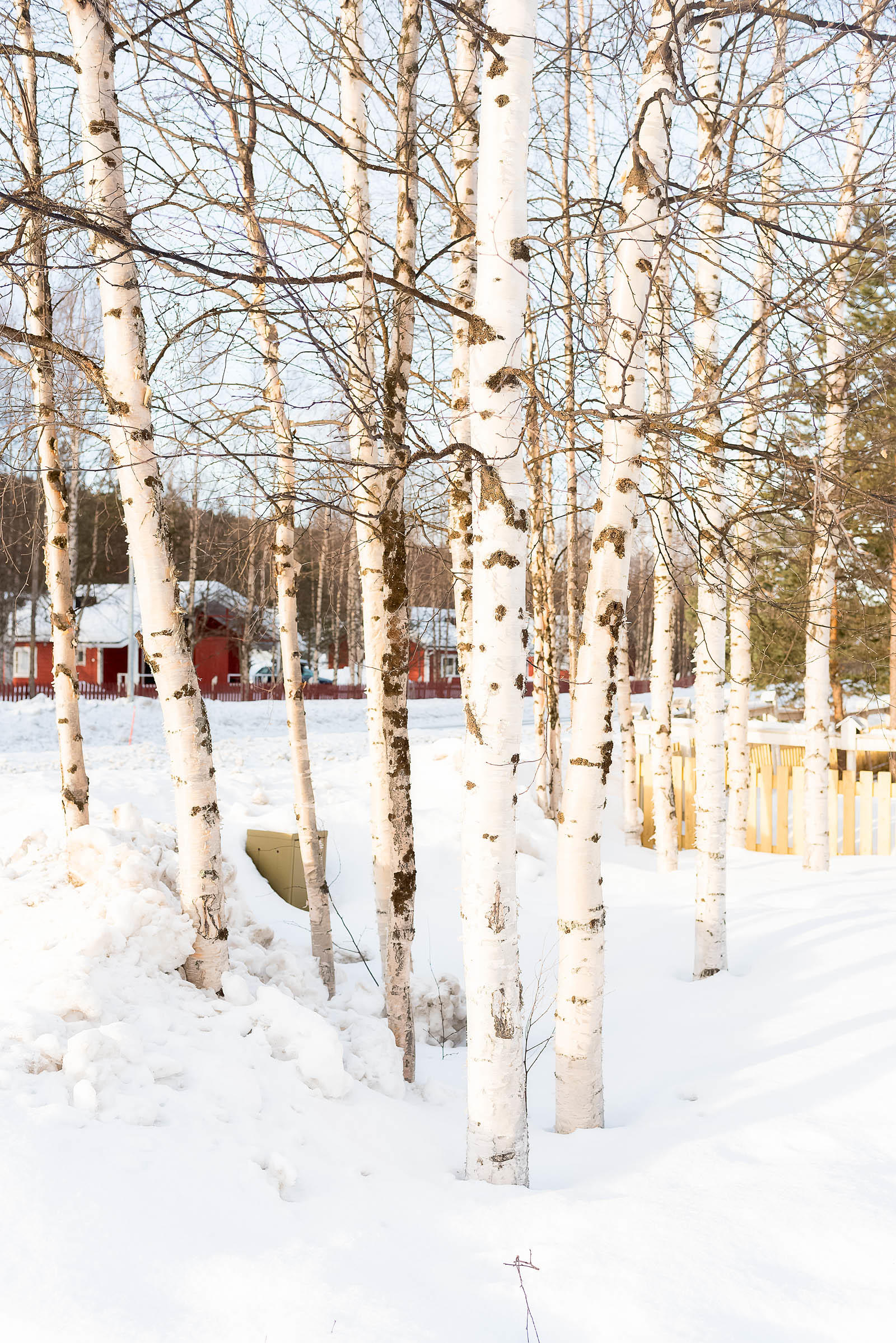 Rovaniemi Hotel Ounasvaara Chalets Lapland Hotel Finland
