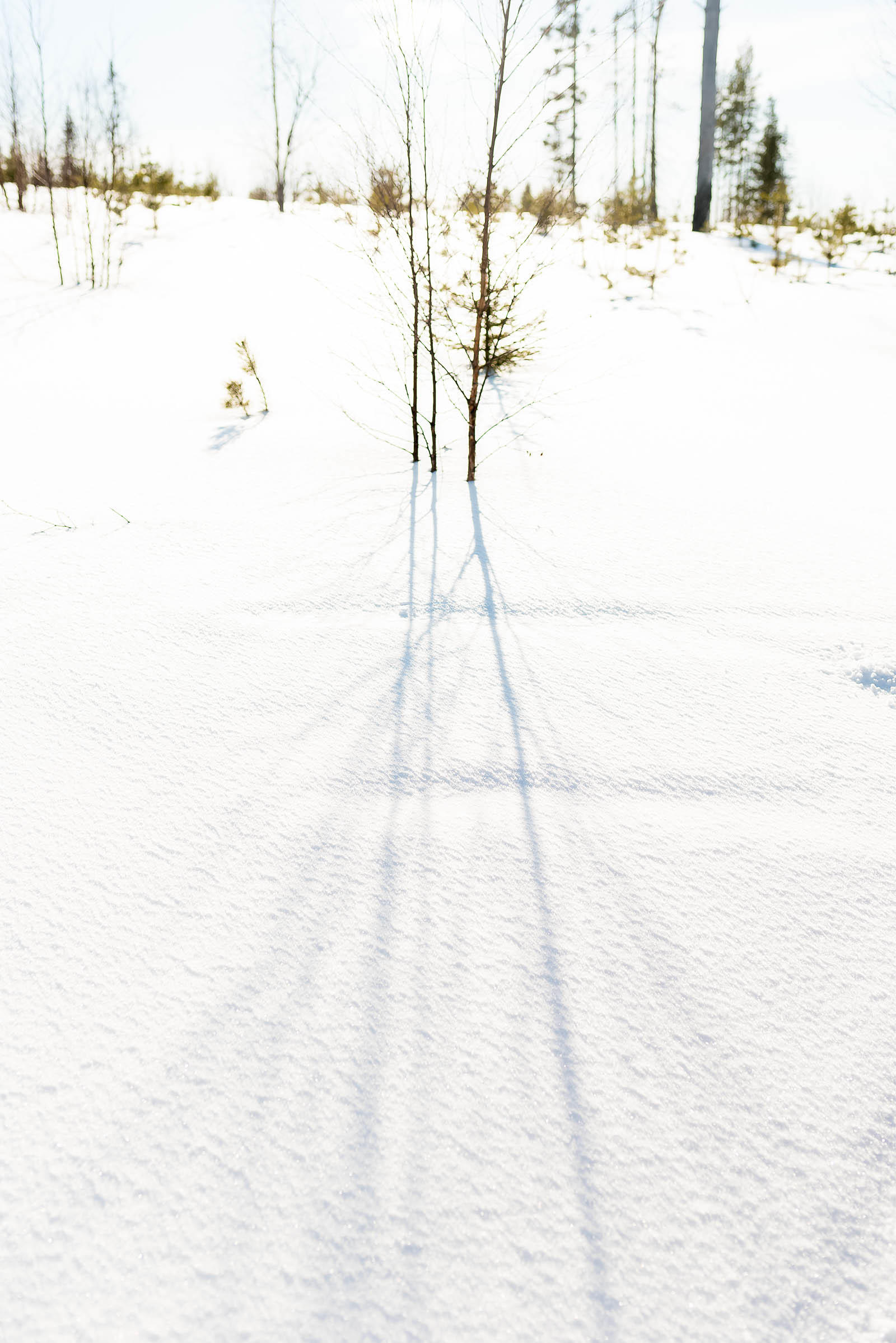 Rovaniemi Finland Lapland Safaris Snowmobiling