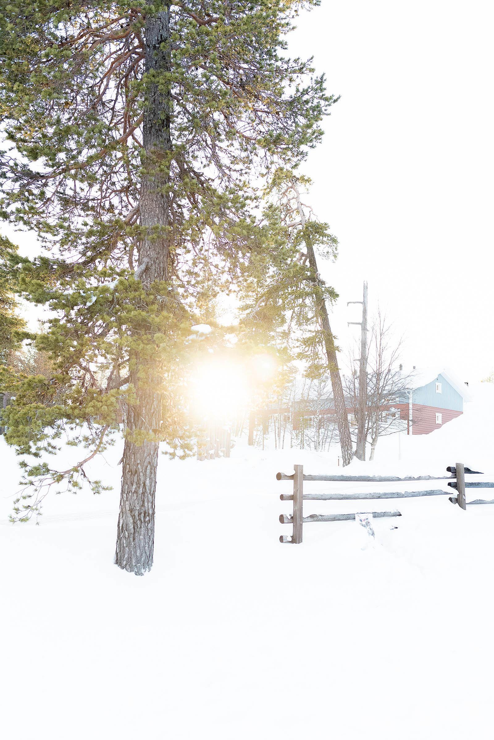 Hotel Riekonlinna Inari Saariselkä Lapland Safaris Cross Country Skiing