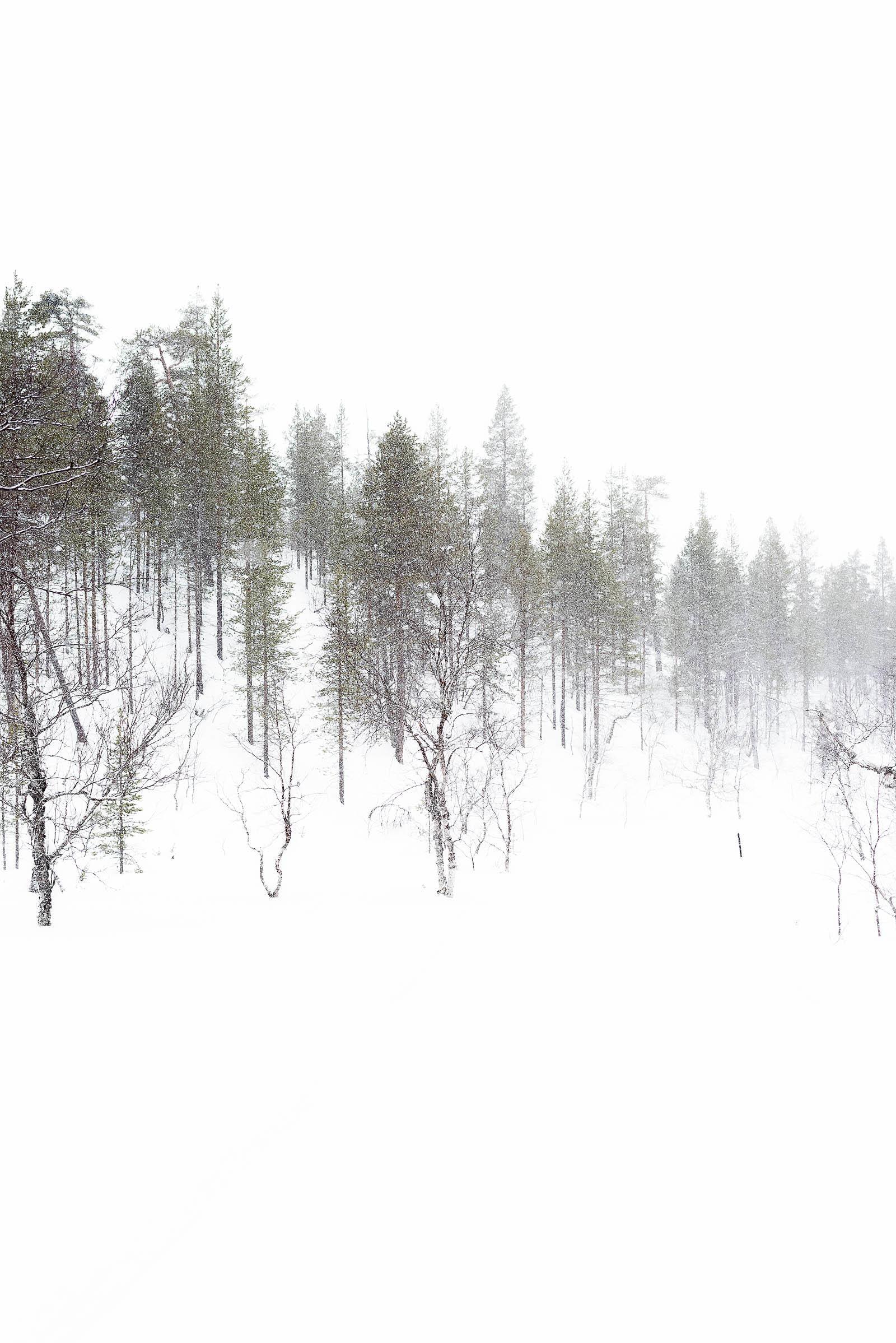 Hotel Riekonlinna Inari Saariselkä Lapland Safaris Finland Snowshoeing