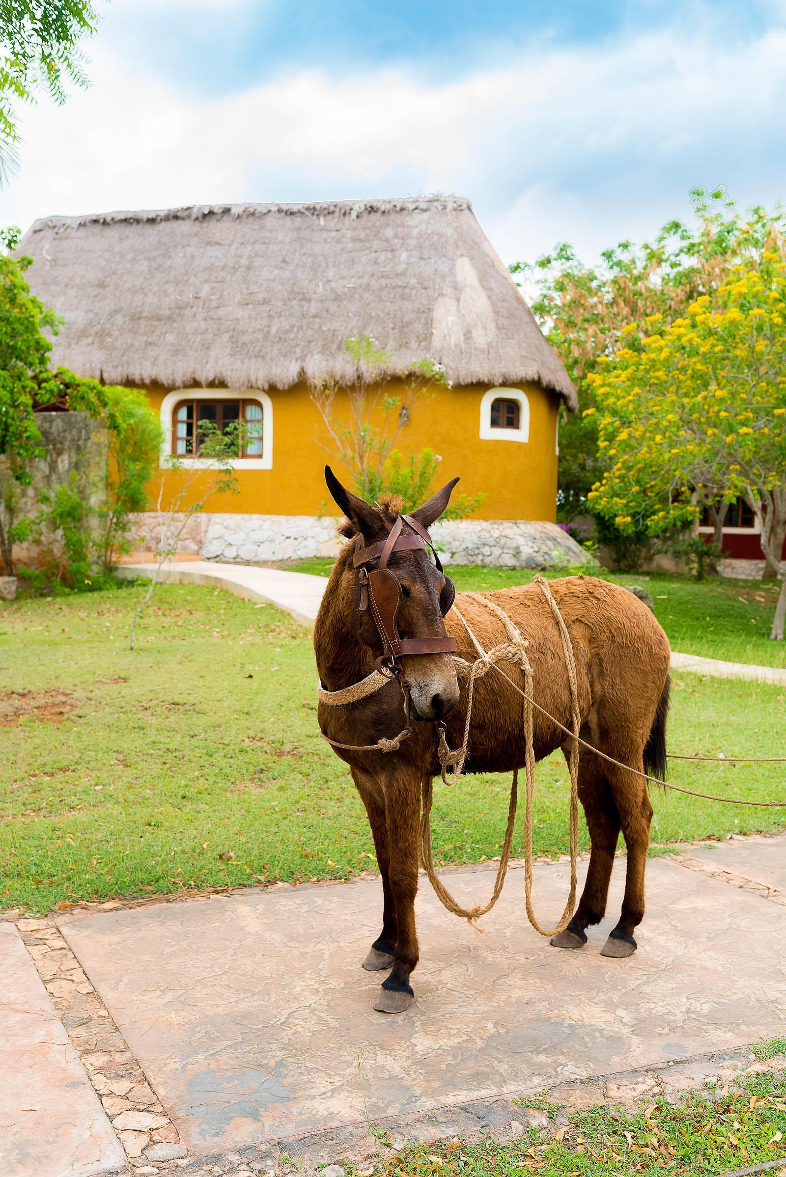 Sotuta De Peón Hacienda Yucatán Mexico