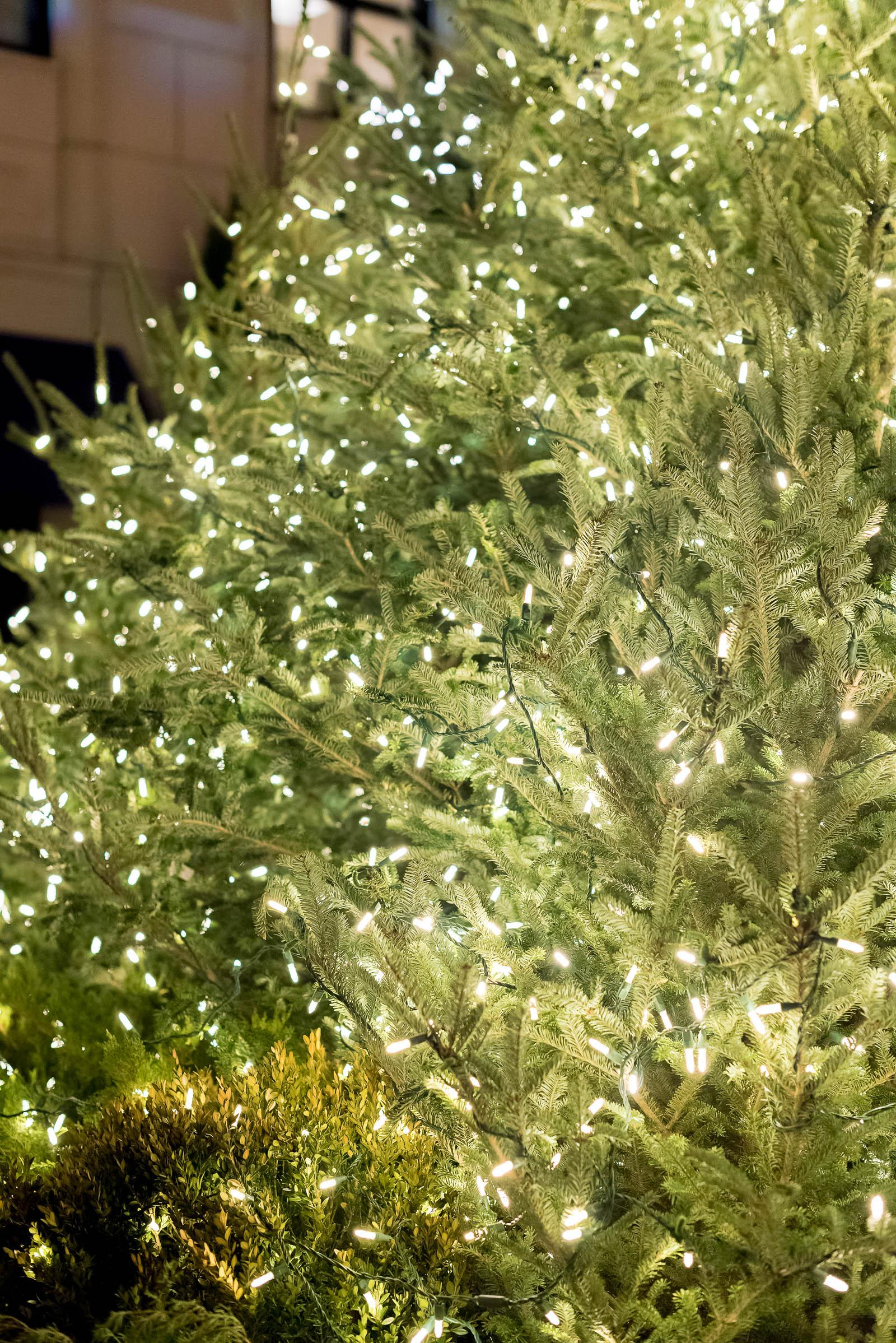 Waldorf Astoria Chicago Christmas Tree Lighting 2016