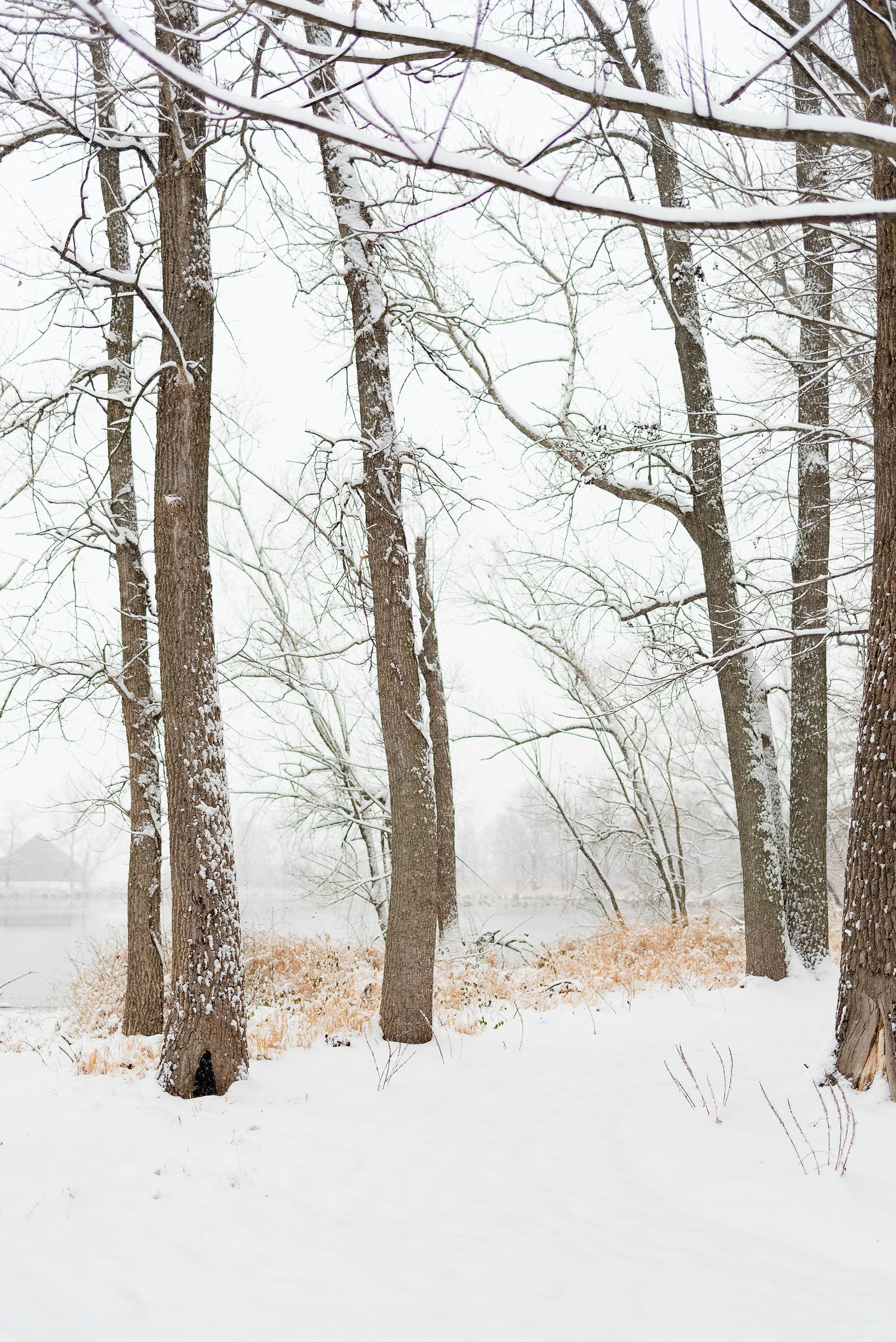Winter Snow 2017