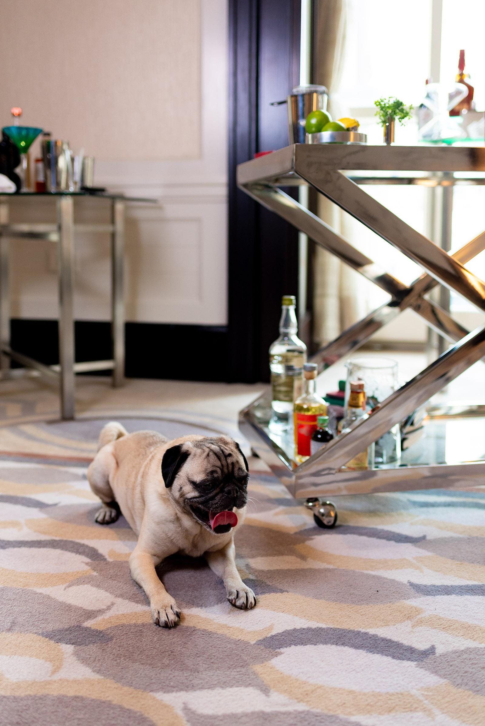 Peninsula Chicago Z Bar Pug Commercial