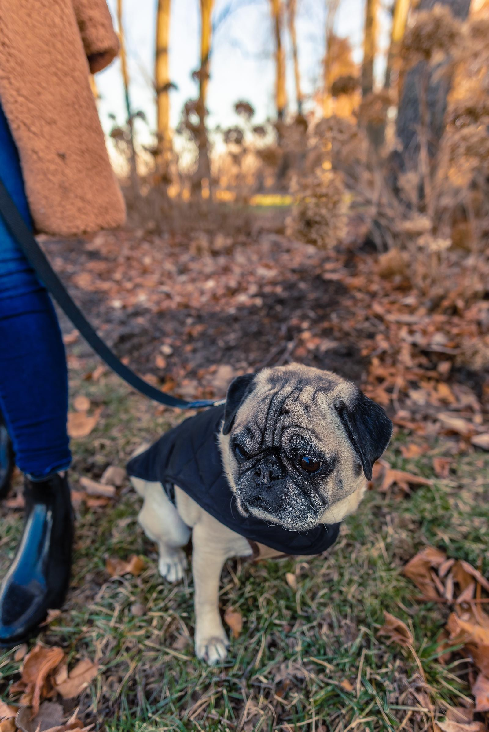 Healthy Winter Dog Tips