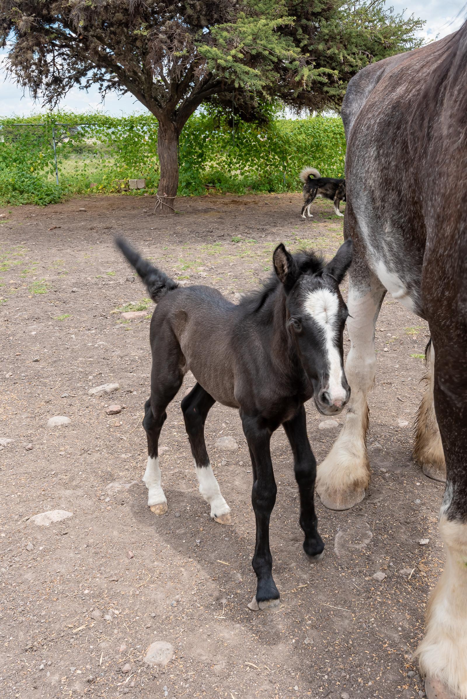 Horse Rescue SMA San Miguel de Allende Mexico